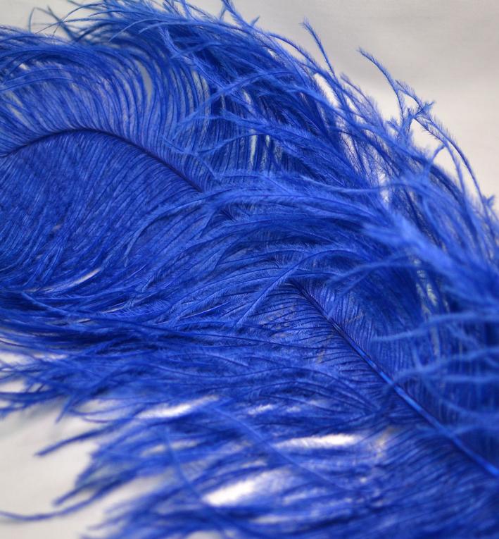 φτερο μπλε